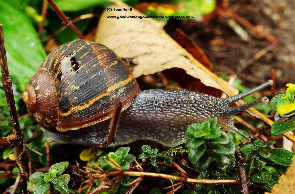 Bugs - snail 43 - Copy (1024x676)